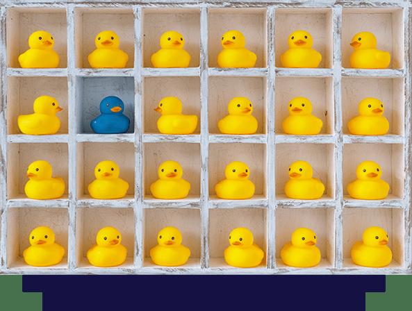 diversity-yellow ducks